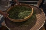 Efsa, antiossidanti tè verde sicuri,attenzione a integratori
