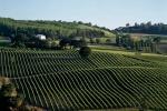 Vinitaly: Imt-Nomisma,abbinata cibo-vino traina export