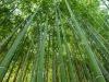 A Cibus arrivano i germogli di bambù