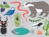 LEarth BioGenome Project mira a mappare il Dna di tutti gli eucarioti in dieci anni (fonte: Mirhee Lee)