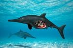 Rappresentazione artistica di una femmina di ittiosauro con embrioni (fonte: Nobumichi Tamura)