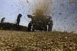 Misure frena-diffusione di parassiti alimentari nei commerci