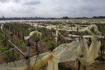 A Chiaramonte Gulfi il vento devasta le coltivazioni, le immagini delle serre distrutte