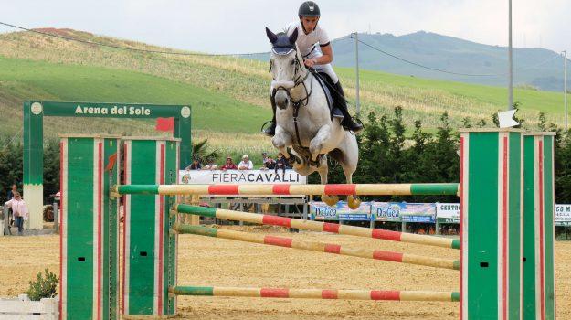 segesta cavalli 2018, Giuseppe Gionfriddo, Trapani, Sport