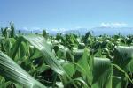 Assosementi, Ue favorisca l'innovazione vegetale
