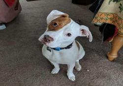 Il cane di 10 mesi è stato adottato da una donna del Lancashire, in Inghilterra