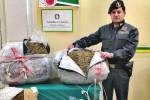 Trovato con 57 chili di marijuana in auto, arrestato corriere della droga a Messina