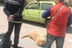 Palma di Montechiaro, avvelenati altri quattro randagi