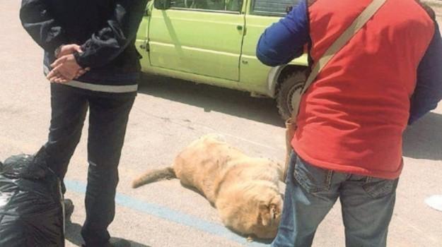 Avvelenamento cani, Agrigento, Cronaca