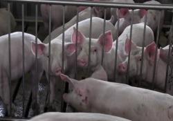 Il 94% degli italiani ritiene importante il benessere degli animali negli allevamenti e il Ministero della Salute sta definendo le nuove linee guida. Ma c'è una sfida sul significato della parola. E si gioca tra produttori, scienziati, supermercati e consumatori
