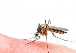 Il contagio attraverso le zanzare Anopheles