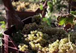 Cucina Blog Award 2018, finalista della categoria Wine&Spirits: Intravino