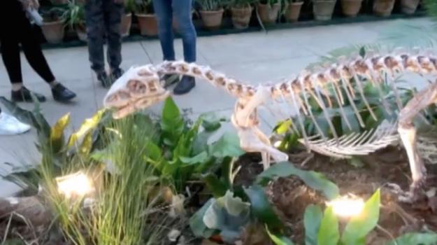 Dinosauri in mostra all'Orto botanico di Palermo