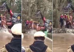 L'operazione dei pompieri è durata tre ore, poi il cavallo è stato portato in salvo