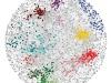 La rete delle interazioni fra i geni ha permesso di identificare quelli coinvolti in processi biologici fondamentali (fonte: Raamesh Deshpande)