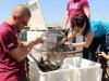 Il rilascio di i di storioni e anguille nel Po