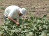 I giovani diventano tutori di lotti agricoli in Puglia