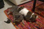 Bagherese salva un rondone: così è nata un'amicizia con due gatti e un coniglio