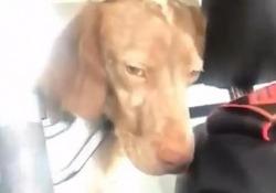 La gag dei militari che salvano il cane abbandonato