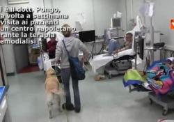 La prima sperimentazione internazionale di Pet Therapy per pazienti sottoposti a terapia di emodialisi - AltrimondiNews