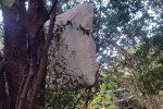 Mobili e perfino cuscini tra gli alberi: le immagini dei rifiuti nel Parco della Favorita di Palermo
