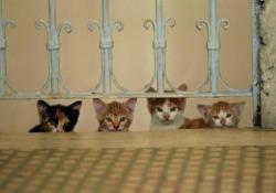 Da migliaia di anni popolano la metropoli turca: sono i felini vagabondi della città t che arrivano al cinema con un documentario di Ceyda Torun