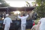 """Sudafrica, i leoni """"invadono"""" la jeep con i turisti e saltano a bordo"""