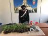 Coltivava piante di marijuana nell'orto di casa, un arresto a Modica
