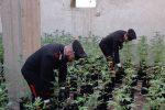 Scoperte mille piante di marijuana in due serre artigianali a Priolo Gargallo