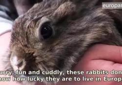 Il video dell'Europarlamento che spiega perché è importante arrivare ad un bando mondiale dei test su cavie, conigli e altre specie da laboratorio