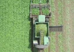 Su YouTube il filmato di una raccoglitrice di cetrioli al lavoro è parecchio cliccato
