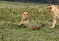 Le immagini dal Kenya, nel parco della Palude Musiara