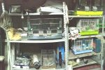Leonforte, in garage droga e uccelli chiusi nelle gabbie: arrestato