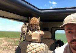 La scena filmata da un turista americano in Tanzania