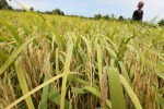 Approvato in Cdm decreto su gestione rischi in agricoltura