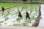 Nuova intesa Fao-Ica per l'agricoltura familiare