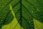 Consiglio Ministri approva il Testo unico delle piante officinali