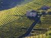 Arriva 4.0 in agricoltura, controllo a distanza dei terreni