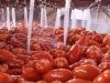 Pomodoro da industria, produzione -15% giù anche le rese