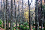 Da Paesi Ue ok a target 2030 emissioni agricoltura e foreste