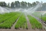 Studio Università Sassari, nuova tecnica coltivazione riso
