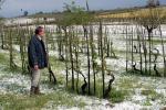 Maltempo: Coldiretti, nei campi Sos nubifragi e grandine