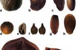 Frutta in Sardegna già nel periodo fenicio e punico