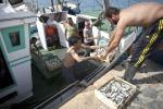 Tagli a fondi Ue per la pesca costerebbero a Italia 19 milioni