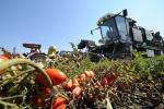 Pomodoro da industria, siglato accordo per Centro Sud