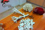 Uno dei coralli sequestrati