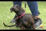 Cani da tutto il mondo a Palermo: va in scena la mostra internazionale