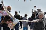 Venezia, furto 'con destrezza' del gabbiano in Piazza San Marco