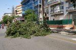 Albero caduto in viale Lazio