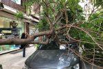 Vento a Palermo, albero si abbatte su un'auto. Allerta meteo in Sicilia